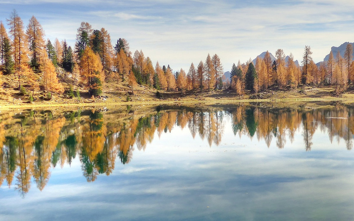 Reflection of trees in a mountain lake.